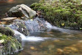 Creek nature scene — Stockfoto