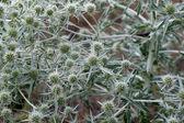 Natura roślina tło — Zdjęcie stockowe
