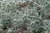 Pflanze natur hintergrund — Stockfoto