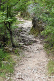 Forest path — Stock Photo
