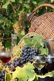 Red and white grape and wine — Stock Photo