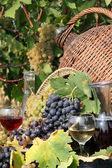 Rode en witte druivenmost en wijn — Stockfoto