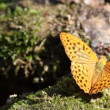 Stock Video: Butterfly nature scene