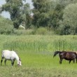 Stock Video: Herd of horses in pasture
