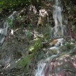 Stock Video: Little waterfall nature scene