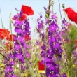 Stock Video: Wild flowers