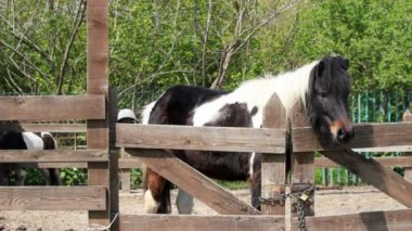 Farm scene with pony horse — Stock Video