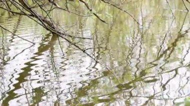 Река отражение — Стоковое видео