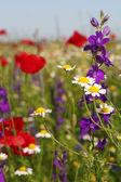 Colorful wild flowers nature spring scene — Stock fotografie