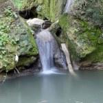 Nature spring scene creek — Stock Photo