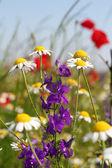 五颜六色的野花自然场景 — 图库照片