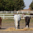 Horses and foals in corral farm scene — Stockfoto