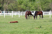 Horses grazing in corral farm scene — Stock Photo