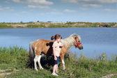 Midilli atı ile güzel küçük bir kız — Stok fotoğraf