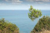 Paisaje marino con pino y nave — Foto de Stock