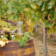White wine and grape on barrel in vineyard — Stok fotoğraf