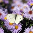 Butterfly on flower nature background — Stock Photo