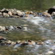 Stock Photo: Stream water with rocky bottom spring season