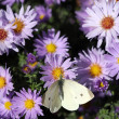 Butterfly on colorful spring flower nature background — Stock Photo