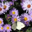 Stock Photo: Butterfly on colorful spring flower nature background