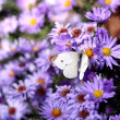 Butterfly on flower nature background  — Stock Photo #38895207