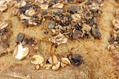 Bread crust with seeds close up food background — Стоковое фото
