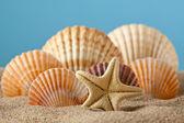Rozgwiazdy i muszle na piasku — Zdjęcie stockowe