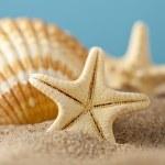Starfish and seashells on beach — Stock Photo #47305959