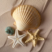Shells on beach — Stock Photo