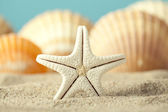 Starfish and seashell on beach — Stok fotoğraf