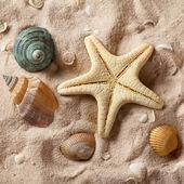 Seashells and starfish on sand — Stock Photo