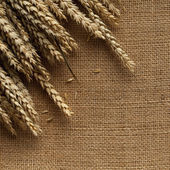 Ears of wheat on jute background  — Stock Photo