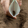 Sowing seeds — Stock Photo
