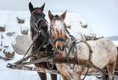 At kızak açık — Stok fotoğraf