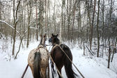 Horse sledge outdoor — Stock Photo