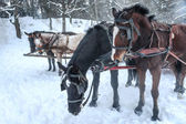 Horse sledge outdoor — ストック写真