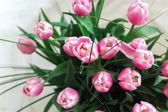 Bouquet of tulip on a white background. — Stock Photo