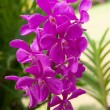 Beautyful pink orchid flowers, at sunny day — Stock Photo