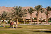 Man-made oasis at the hotel Movenpick Beach Resort Taba. — Stock Photo