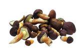Mushrooms on white background — Stock Photo