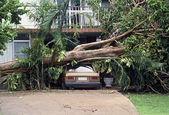 Dégâts du cyclone — Photo