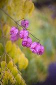 Flores na chuva — Fotografia Stock