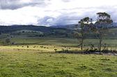 田園風景 — ストック写真