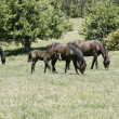 Horses in a paddock — Stock Photo