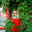 Red Door and Green Vine — 图库照片