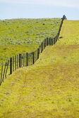 Paysage rural — Photo