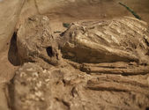 Excavated Human Remains — Stock Photo