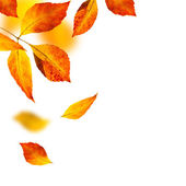 Autumn leafs on white background — Stock Photo