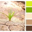 Green plant, cracked earth colour palette swatch — Stock Photo