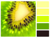 Green kiwi colour palette swatch — Stock Photo
